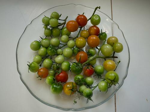 Fallen tomatoes