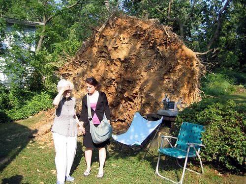 20120630 0659 - storm damage - Grandma's fallen oak - IMG_0667