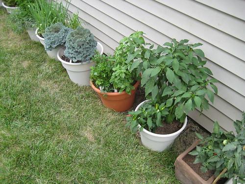 Karis's garden