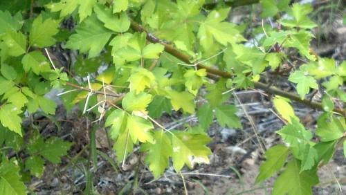 greens in Utah