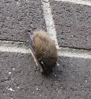 State Street Bats!