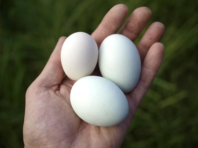 3 Eggs