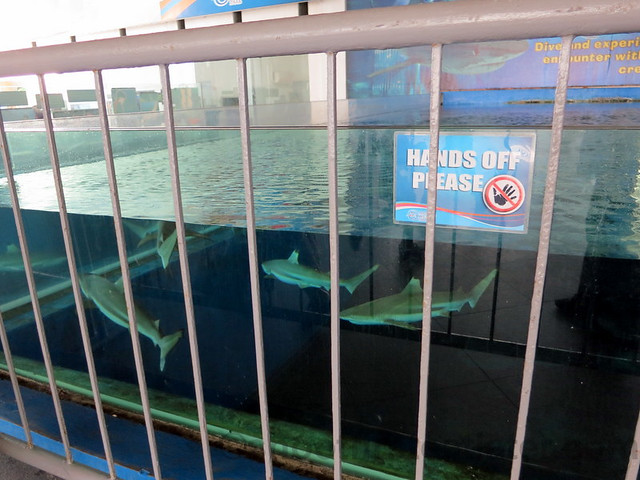 Manila Ocean Park's shark encounter-001