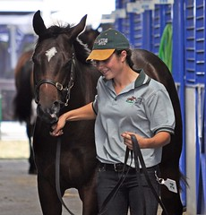 Christine Meunier at the Melbourne Premier Yearling Sales, 2009. Photo by Kathie Thomas