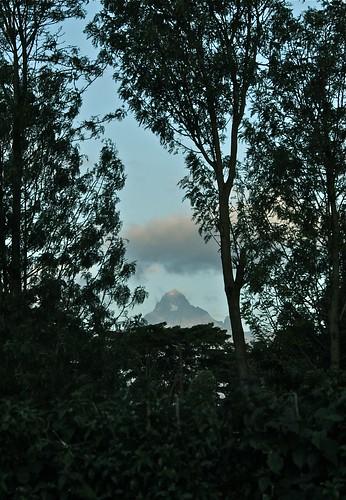 Mt. Kenya through Trees