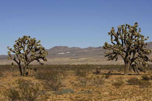 High Desert_8264
