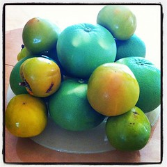 Mmm. My dad brought me some of his homegrown super sweet pomelos and persimmons. #yum