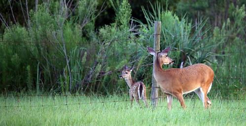 Jumping Deer Sequence Shot 1