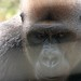 Mefou Primate Sanctuary impressions, Cameroon - IMG_2507_CR2_v1