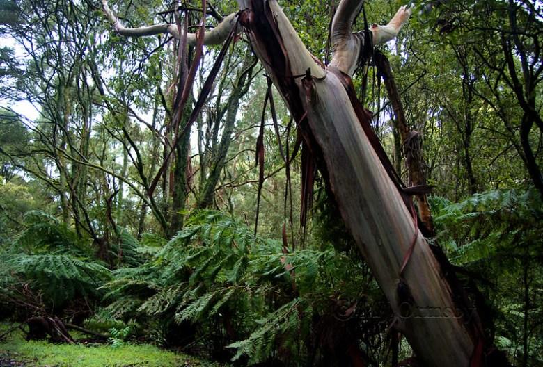 Rainforest leanings
