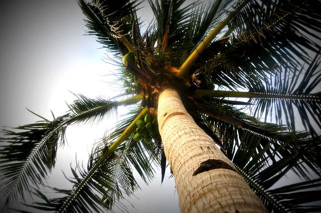 Reachin' for a coconut