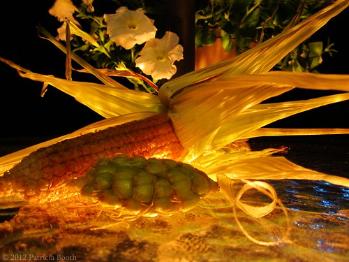 Day 260 Stunted Corn by pixygiggles