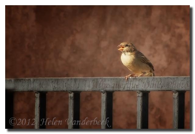 Little Fat Bird