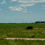 SD Countryside