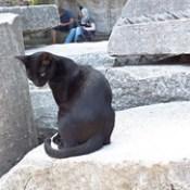 Hagia Sophia grounds cat