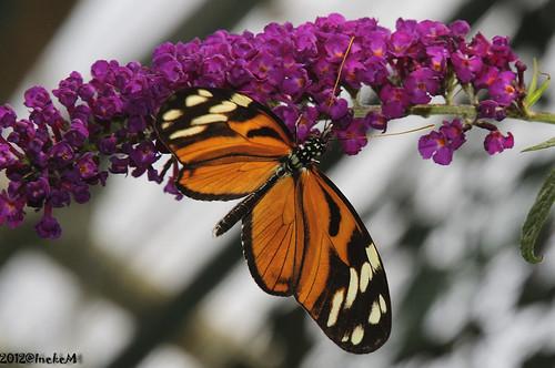Butterfly by Jakesh2010