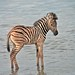 Etosha National Park impressions, Namibia - IMG_3264_CR2_v1