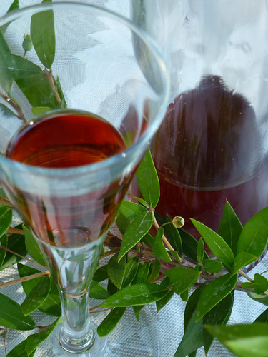 Myrtle liqueur - Liquore di Mirto di Claudia (nanino) -