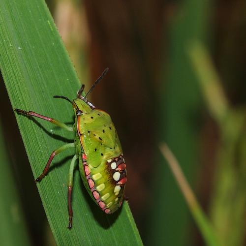 247/366 - Bug by Flubie