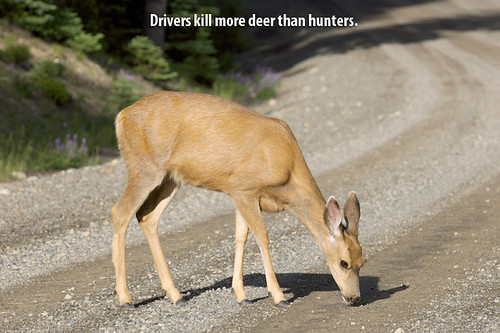 Deer-on-the-Road by DeliveryMaxx