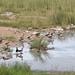 Etosha National Park impressions, Namibia - IMG_3517_CR2_v1