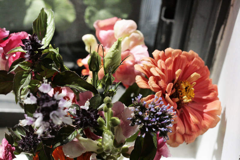 zinnias and snapdragons and friends