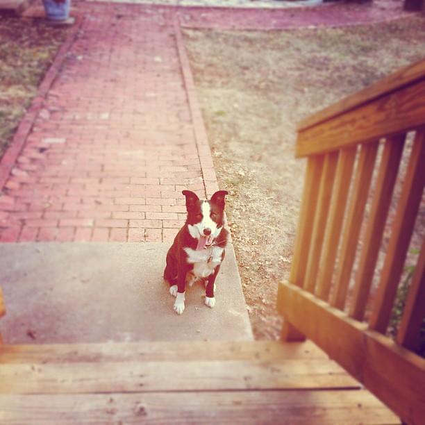 Tucker loves his new backyard!