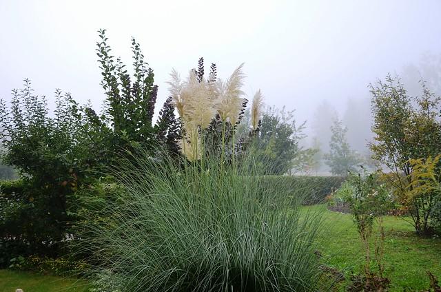 Pampas on a misty Autumn morning