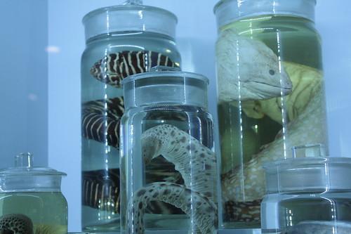 Jars o' eels
