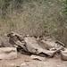 Angola impressions - IMG_2804_CR2_v1