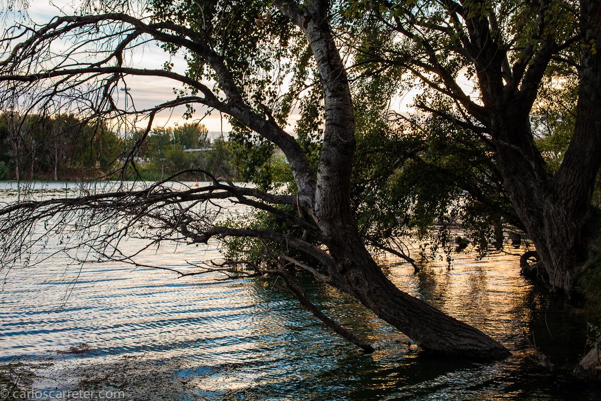 Por la ribera izquierda del Ebro