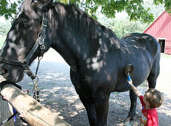 horse_zekie