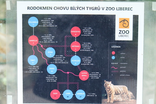 White Tiger family tree