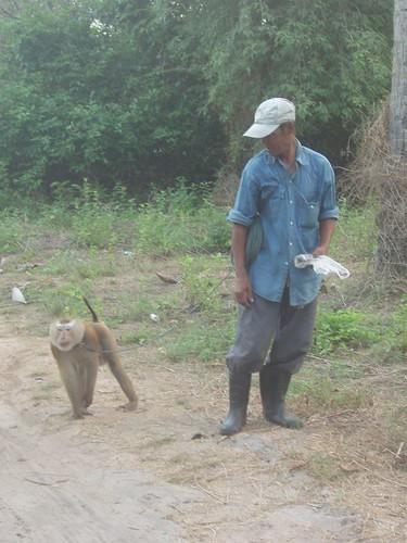 201003220097_working-monkey
