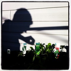 Shadow potting