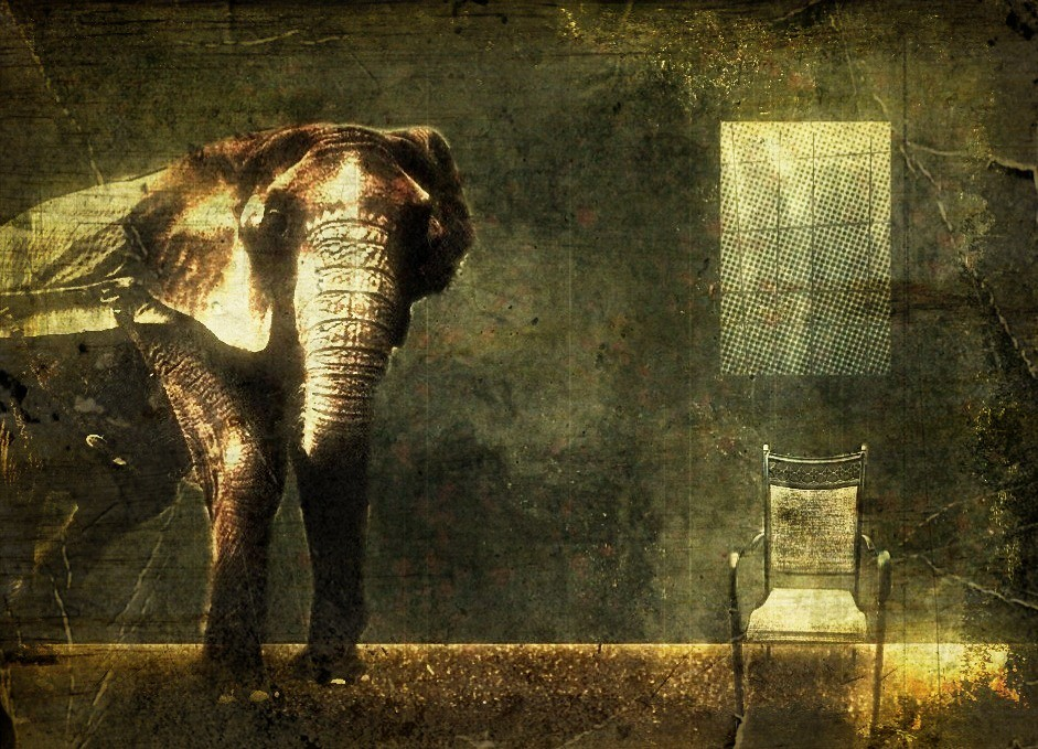 Elephant in the room