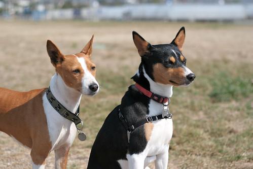26 September 2012 Bowpi and Zorro