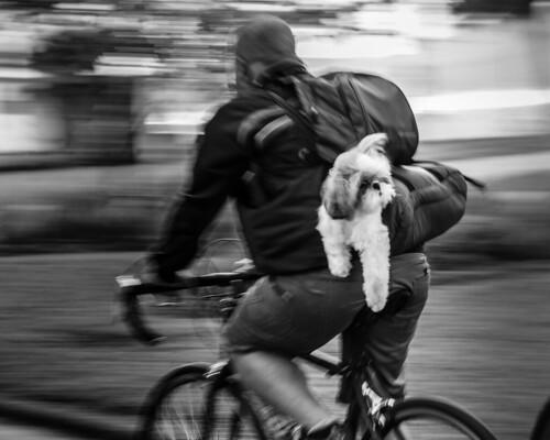 Dog Panning by Luiz L.