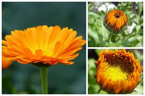 Ammer und Blumengarten 2012-06-304