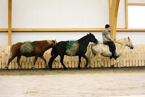 Icelandic horse show at Eldhestar horse farm