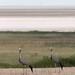 Etosha National Park impressions, Namibia - IMG_3512_CR2_v1