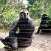 Mefou Primate Sanctuary impressions, Cameroon - IMG_2501_CR2_v1