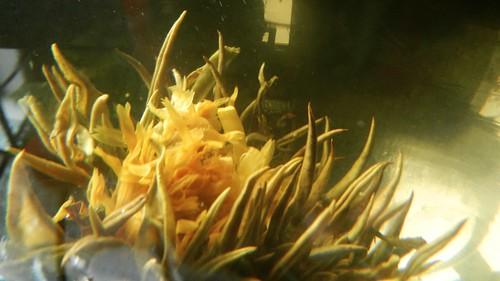 Sea Monster Tea 5