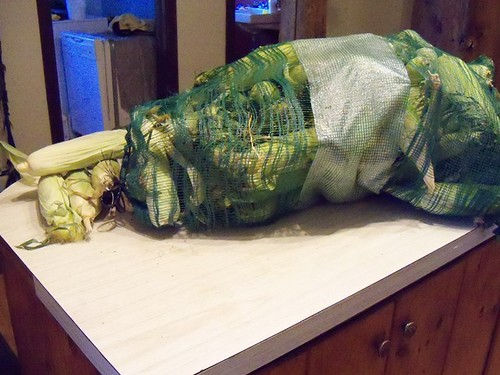 corn on my counter