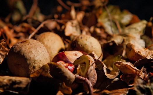Autumn - Week 2