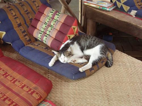 200902020089_comfy-cat
