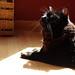 Handsome Cat finds you interesting.