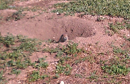 9-28-12 CO - Boulder Prairie Dog 2