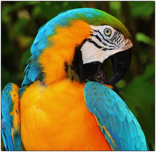 Beautiful Bird - B&G Macaw