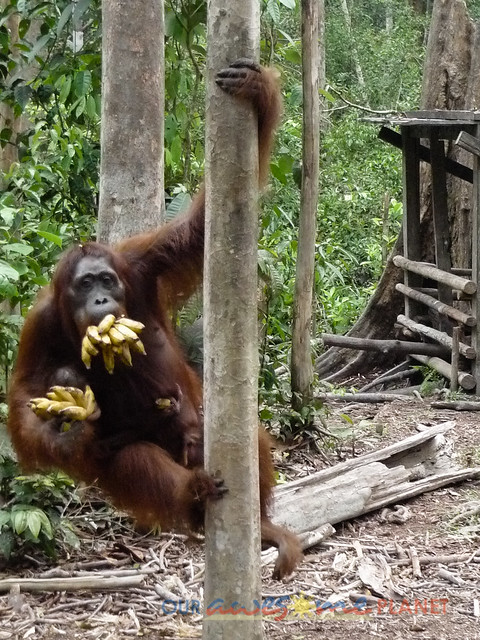 Orangutan World, Tanjung Puting Borneo Adventure-259.jpg